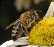 Продукты пчеловодства собранные с собственной пасеки