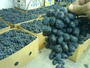 Предлагаем  Виноград Мелким оптом