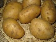 продаю картофель оптом