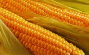 Закуплю у сельхозпроизводителей