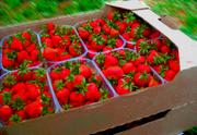 Тара под ягоду из пятислойного гофрокартона