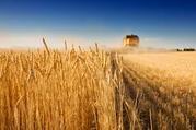 Закупаем зерновые и бобовые по высоким ценам