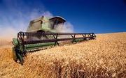 Закупаем Пшеницу,  жмых,  ячмень,  рапс,  сою,  горох,  кукурузу,  подсолнух