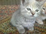 Отдам Котенка в хорошие руки!!!