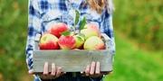 Сбор и упаковка фруктов в Нидерландах