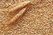 Закупаем Пшеницу 2-3 класса.